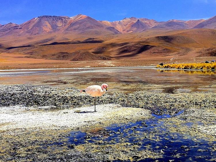 A lone flamingo on a high altitude lagoon Salar de Uyuni Bolivia
