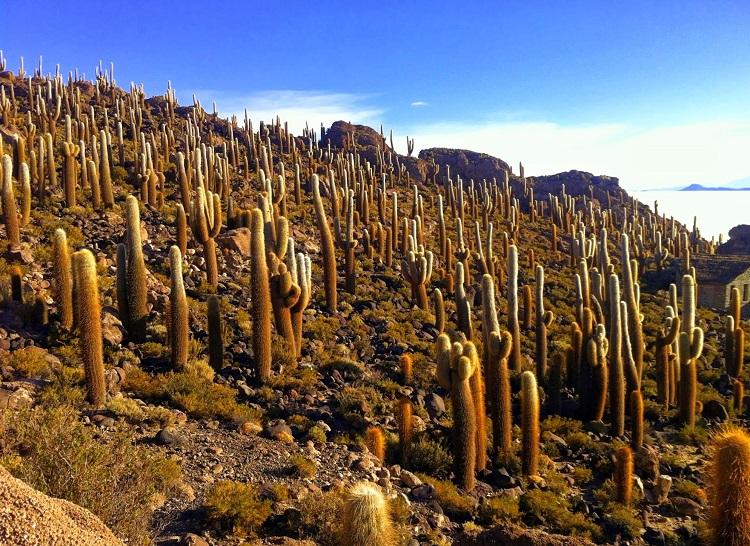 Cactus' Inca Huasi (Fish Island)