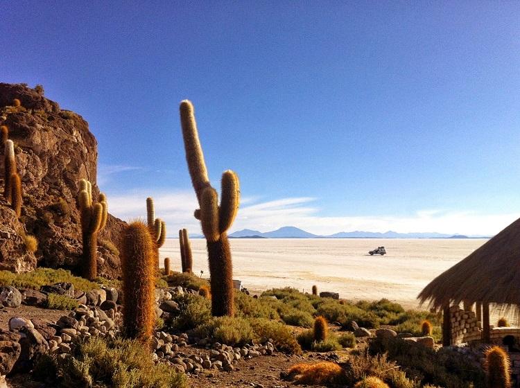 Uyuni's Cactus Island Bolivia