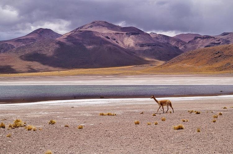 wildlife bolivia