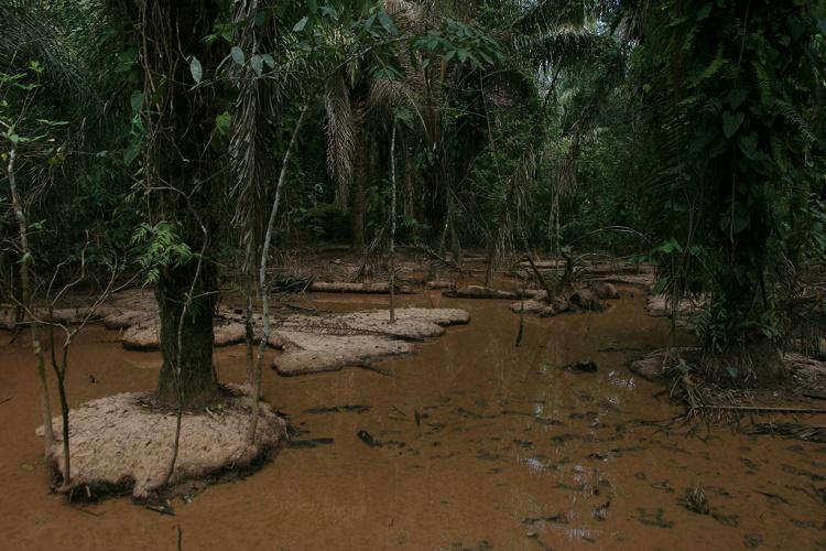 Национальный парк мадиди