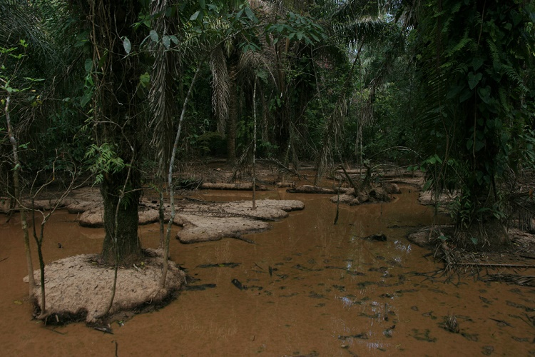 Картинки по запросу Madidi Ulusal Park