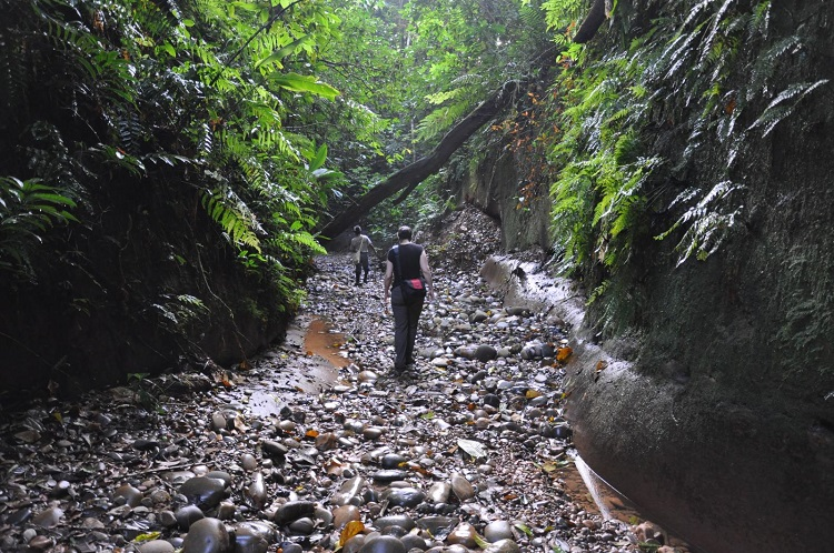 A Guide To Madidi National Park Bolivian Life