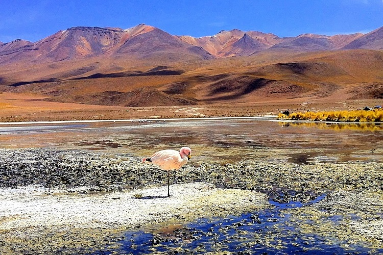 wildlife and nature itinerary bolivia