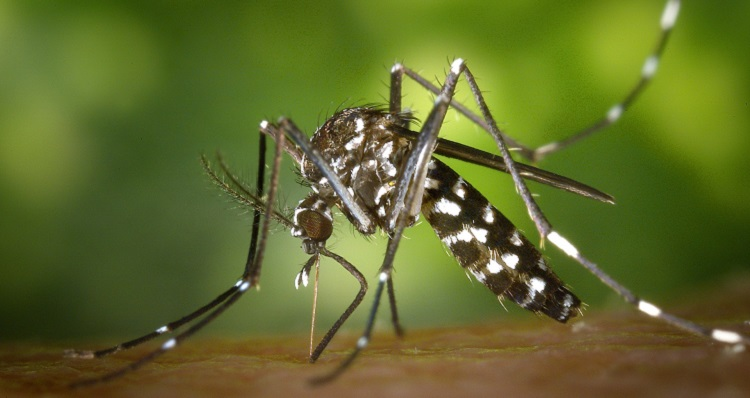 Mosquitoes in Bolivia – How To Protect Yourself