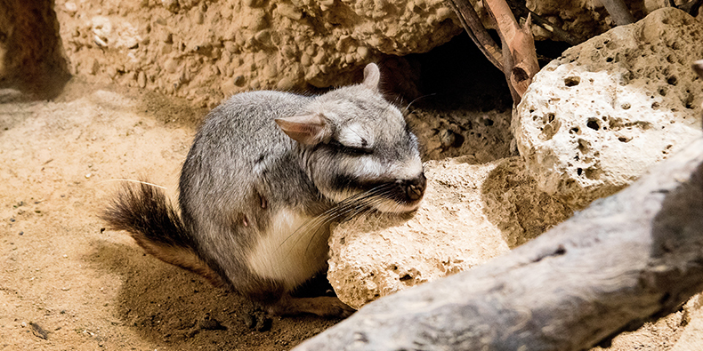 valley of the moon viscacha